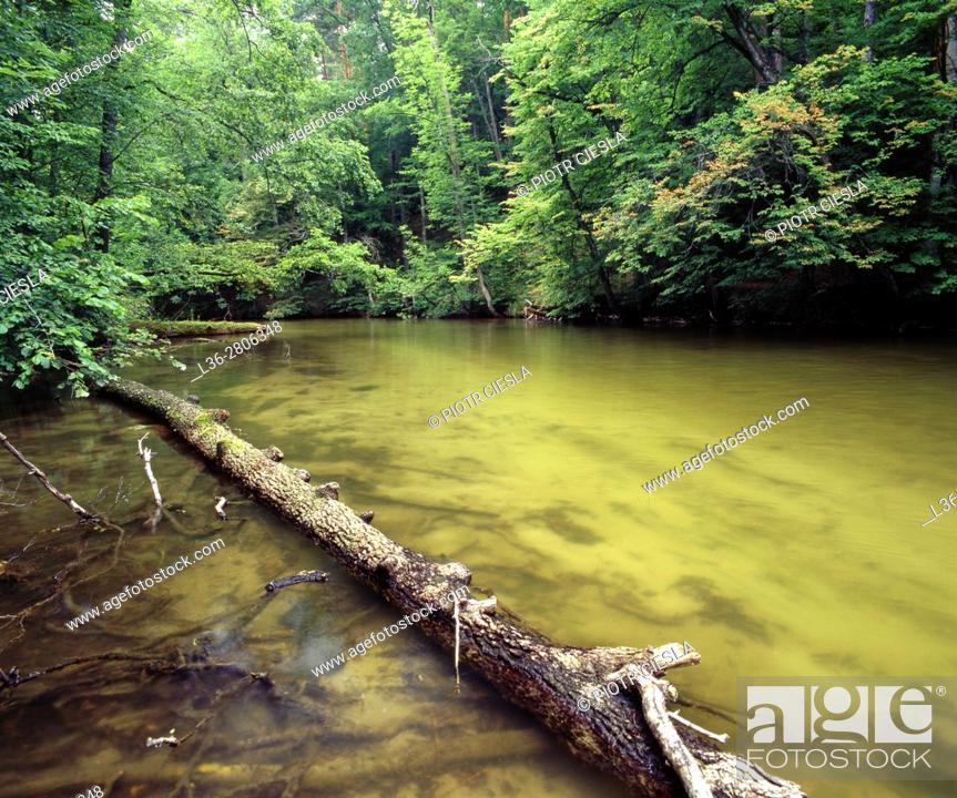 Stock Photo: Poland. Masurian Lake District. Krutynia river.