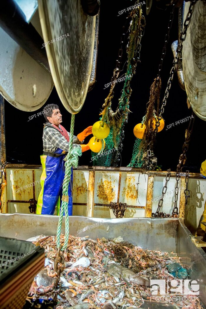 Stock Photo: SAILORS THROWING THE EMPTY NET BACK INTO THE SEA WITH THE LIVE FISH AND PRAWNS NOW ON THE SORTING TABLE, SEA FISHING ON A SHRIMP TRAWLER 'QUENTIN-GREGOIRE' OFF.