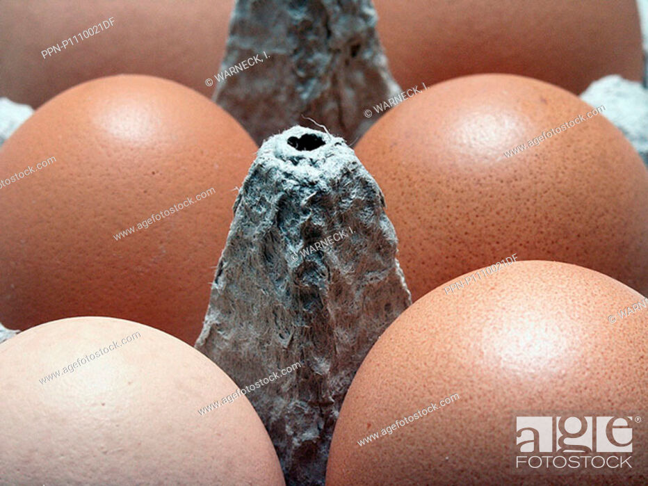 Stock Photo: No People, Food, Eating, Brown, Box, Round, Egg, Groceries, Cardboard, Eggbox