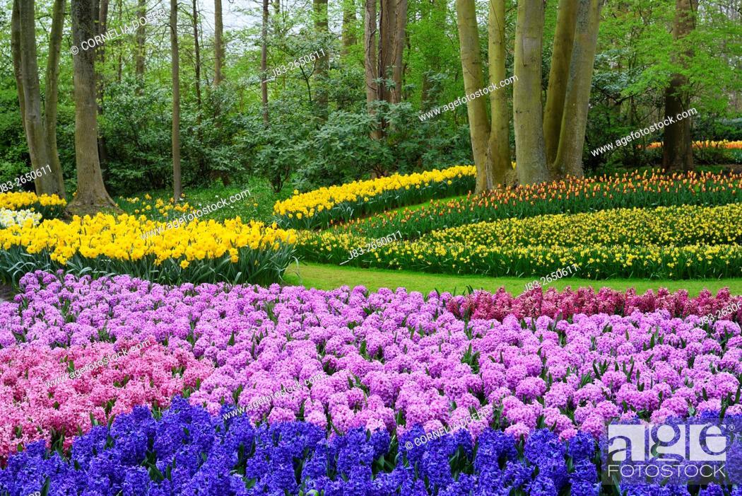 Stock Photo: Garden Design in Spring, Keukenhof, Netherlands, Holland.