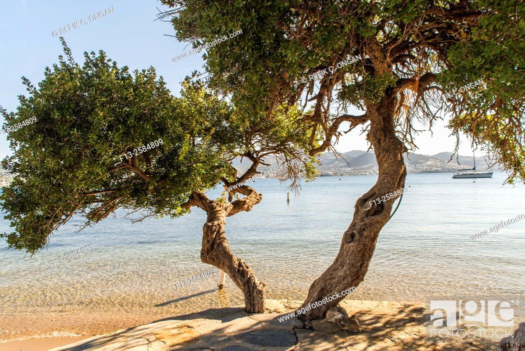 Stock Photo: twin trees by seaside aegean side of Turkey, Bodrum.