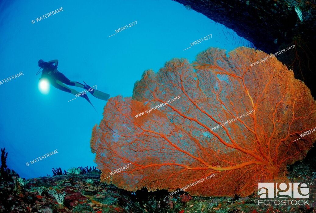 Imagen: Diver and Red Sea Fan, Similan Islands, Thailand.