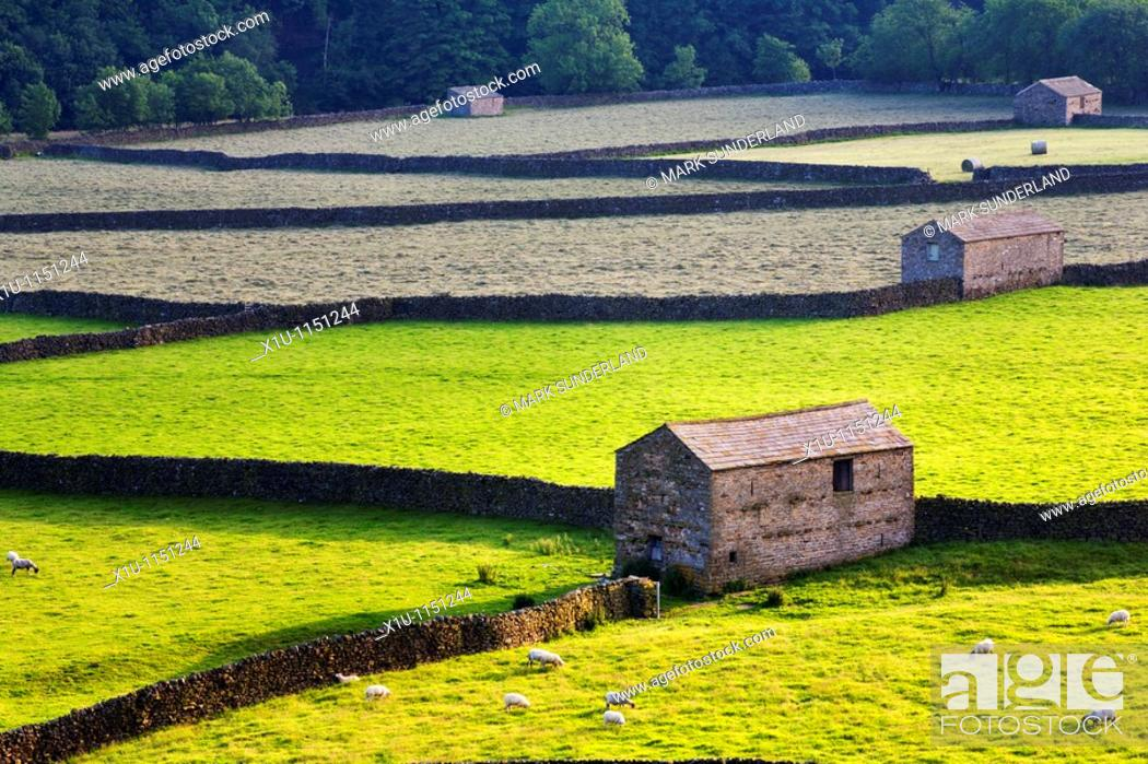 Stock Photo: Field Barns Gunnerside Swaledale Yorkshire Dales England.