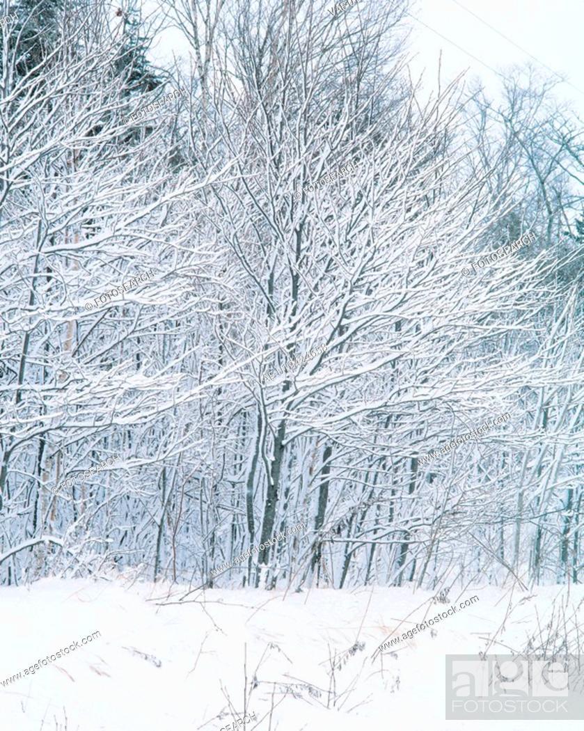 Stock Photo: snow, scenery, tree, winter, landscape, scenic, nature.