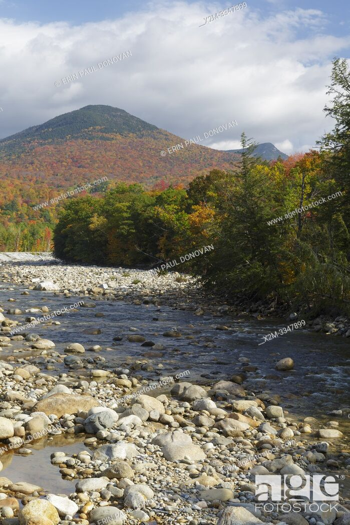 Stock Photo: Autumn foliage on Big Coolidge Mountain from along the East Branch of the Pemigewasset River in Lincoln, New Hampshire on a cloudy autumn day.
