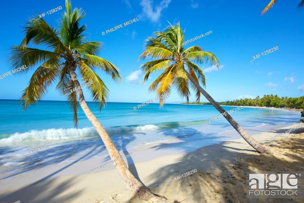 Stock Photo: France, Martinique, Sainte Anne, Grand Anse des Salines Beach.