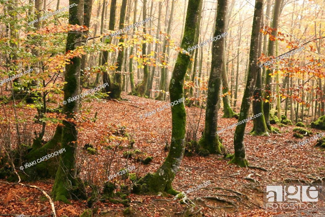 Stock Photo: Autumn in the Valley Baztan, Baztan Valley, Elizondo, Navarra Nafarroa, Spain España.