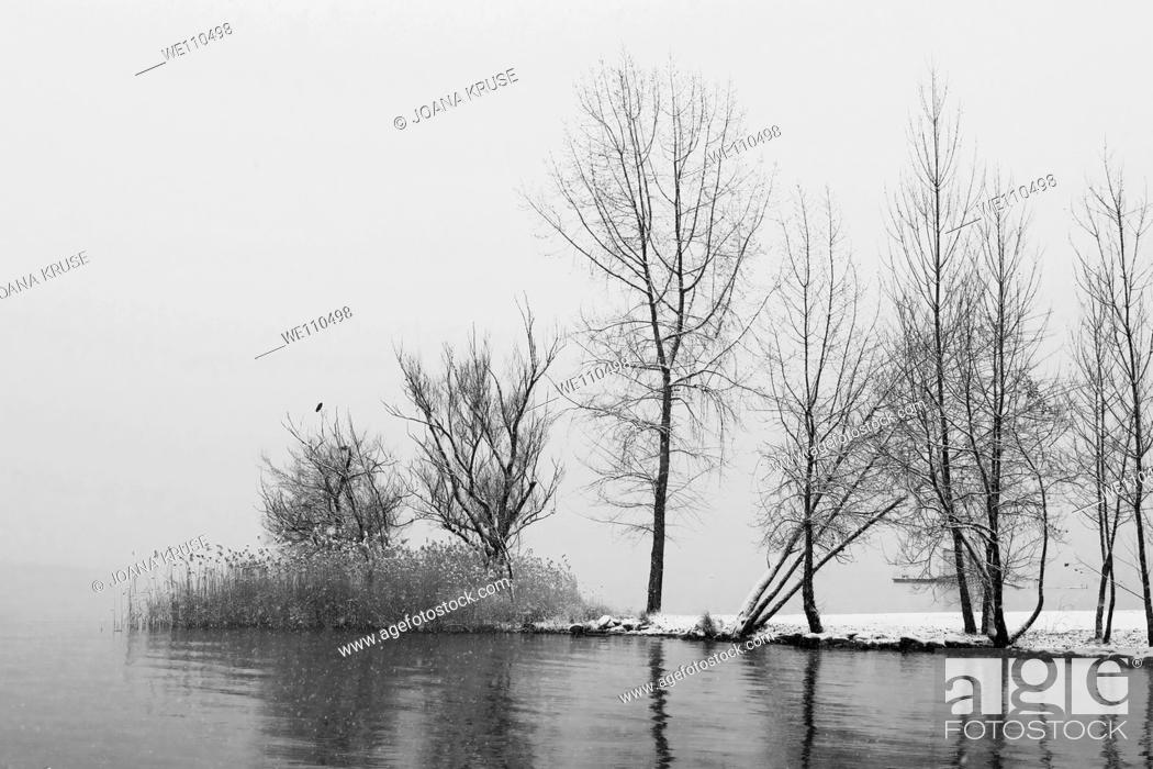 Stock Photo: trees at the Lake Maggiore during the winter time.