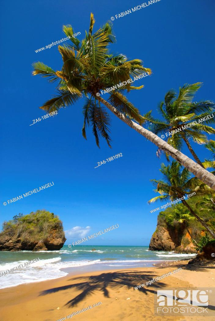 Imagen: Tropical beach with palm trees in the eastern coast of Venezuela.