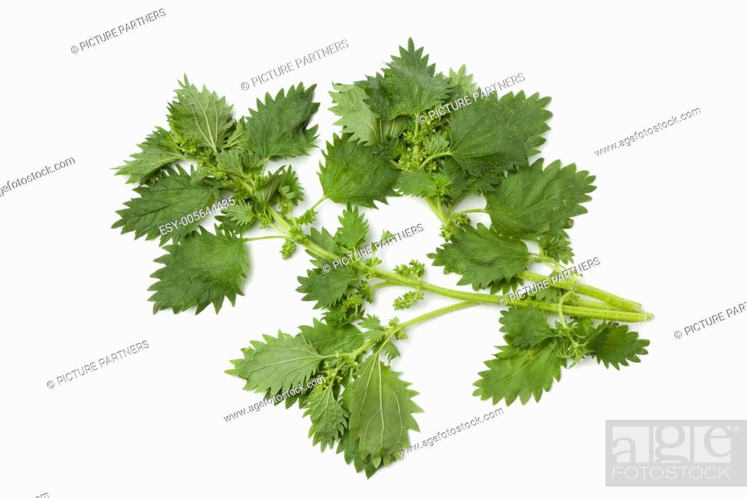 Imagen: Twigs of nettles on white background.