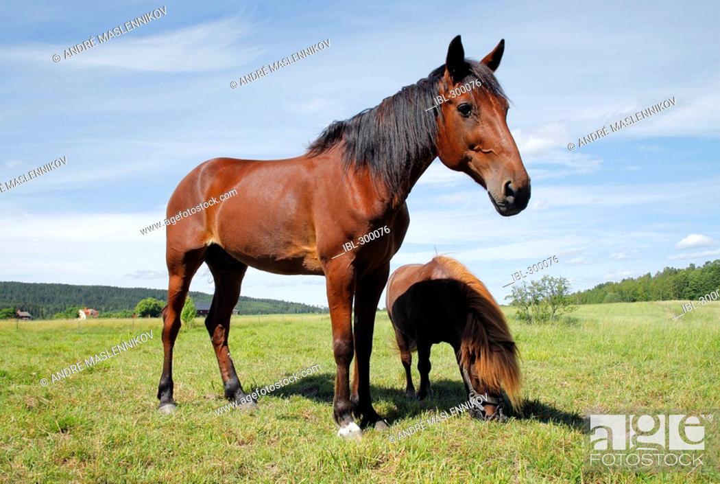Stock Photo: Horses.