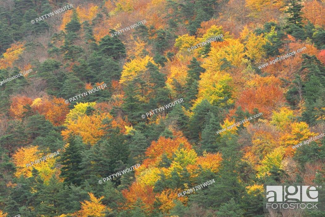 Mixed Forest With Oak Quercus Robur In Autumn From The Air Vercors