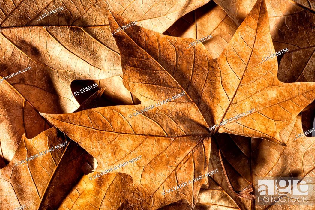 Stock Photo: Fallen leaves in autumn.