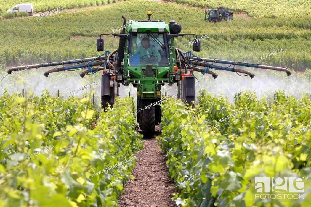 Stock Photo: vineyard in champagne, France.