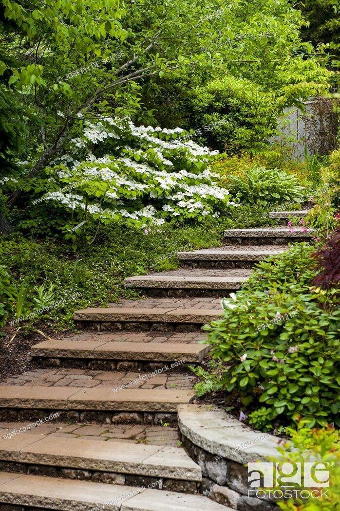 Photo de stock: Stone steps leading through a garden.