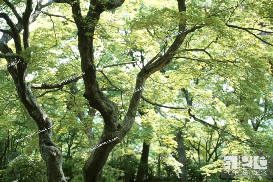 Stock Photo: Tree.