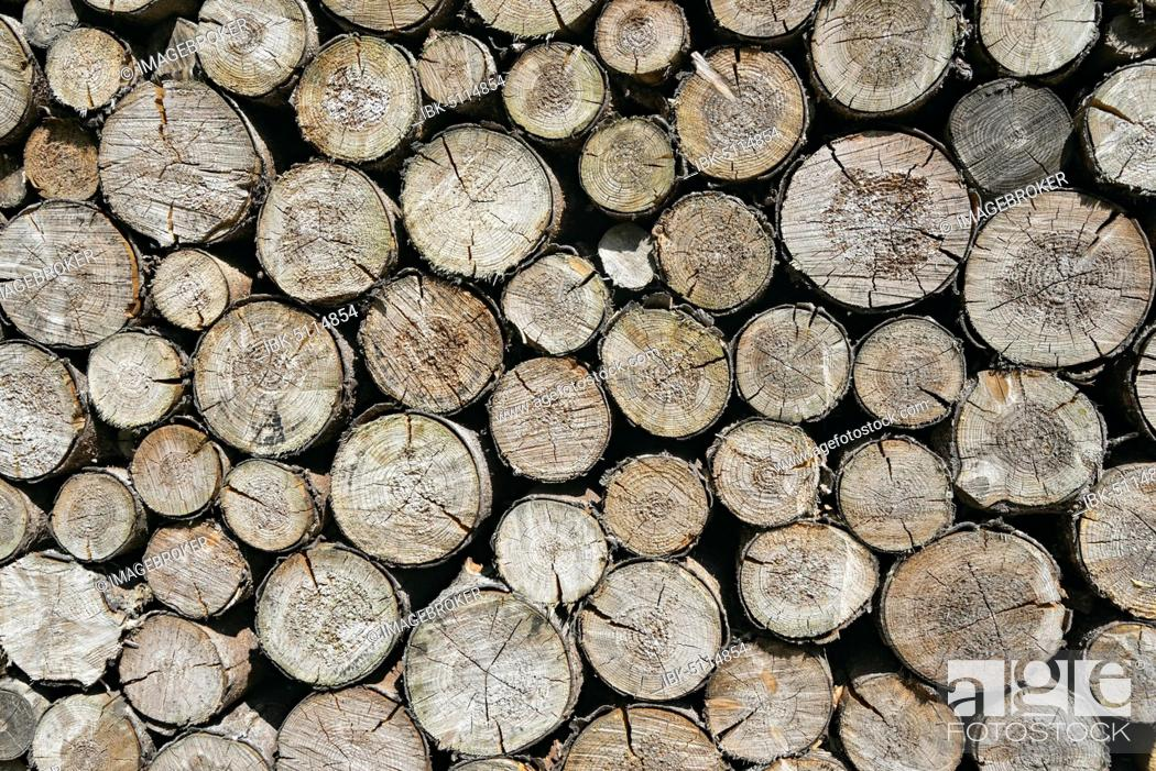 Imagen: Spruces (Picea), stacked logs, background image, North Rhine-Westphalia, Germany, Europe.