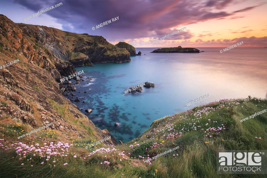 Imagen: Sea thrift on the cliff top above Mullion Cove on Cornwall's Lizard Peninsula, captured at sunset in late April with Mullion Island in the distance.