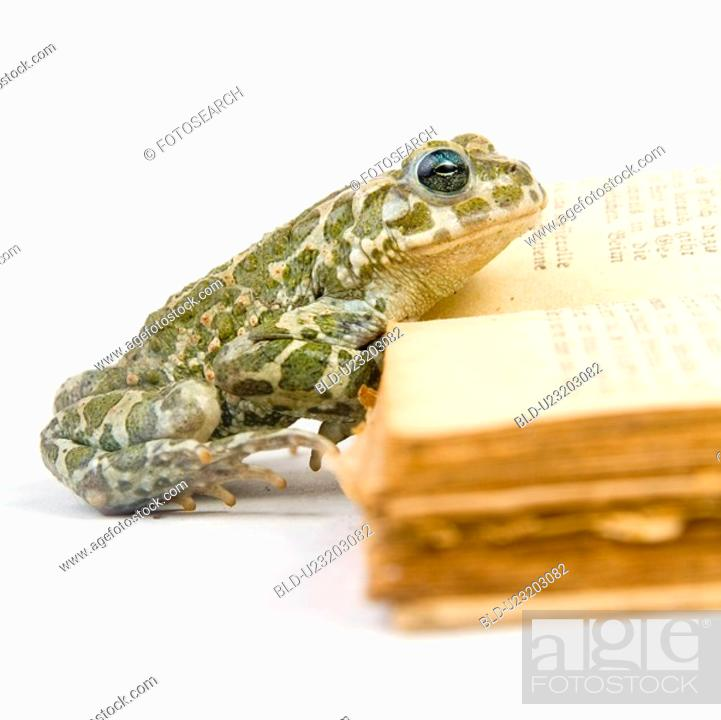 Stock Photo: animals, curiosity, close, book, alfred.
