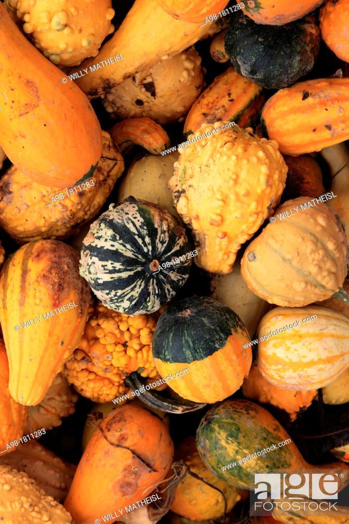 Stock Photo: Harvested decorative gourd.