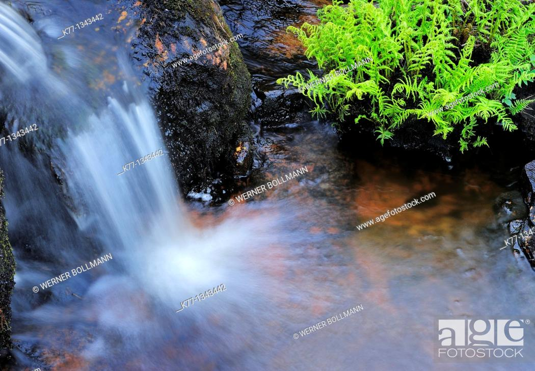 Stock Photo: Little waterfall and fern, Norway.