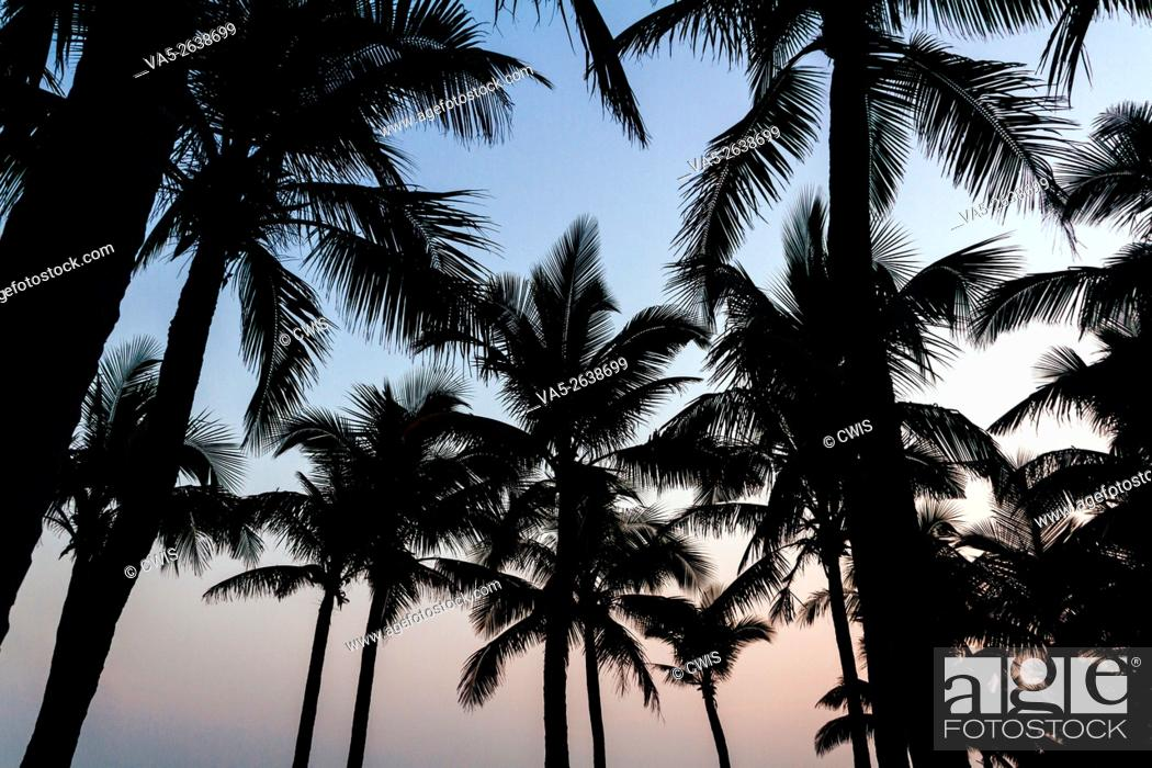 Imagen: Hainan, China - Beautiful coconut trees on the beach at sunset.