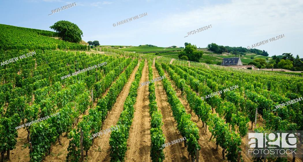 Stock Photo: Vineyards near Saint Emilion, Dordogne, France.