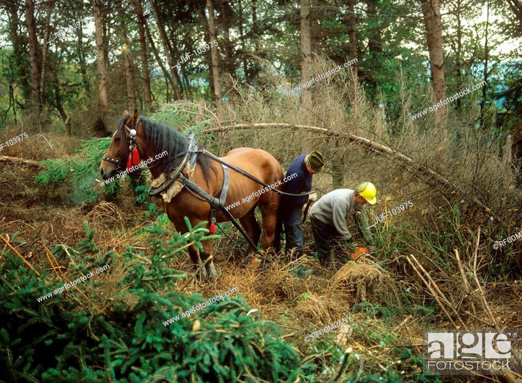 Stock Photo: woodsmen with horse.