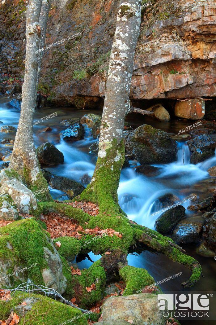 Imagen: River Puente Ra in the natural park of the Sierra Cebollera. La Rioja.