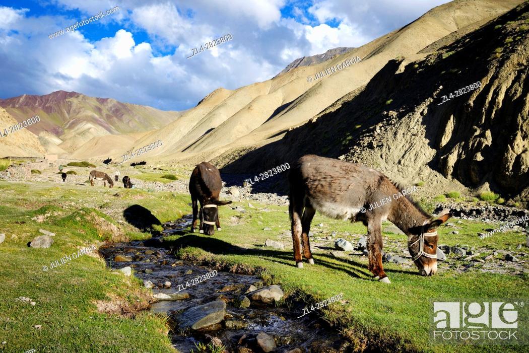 Stock Photo: India, Jammu and Kashmir State, Himalaya, Ladakh, Hemis National Park, donkeys in the village of Rumbak.