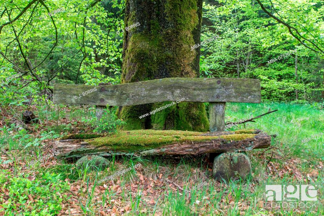 Stock Photo: weathered bench in a beech forest.