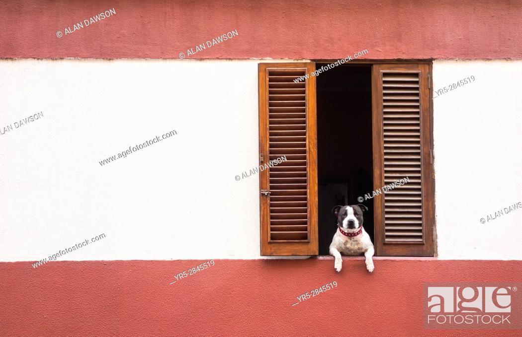 Stock Photo: Dog looking out of window in La Isleta area of Las Palmas, Gran Canaria, Canary Islands, Spain.