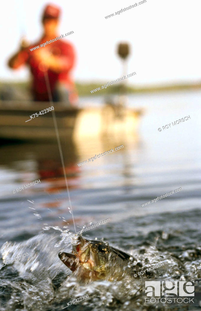 Stock Photo: Largemouth Bass on bait tail jig.