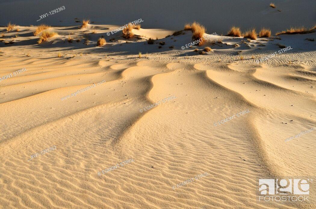 Stock Photo: sanddune of Erg Tihodaine, Wilaya Tamanrasset, Algeria, Sahara, North Africa.
