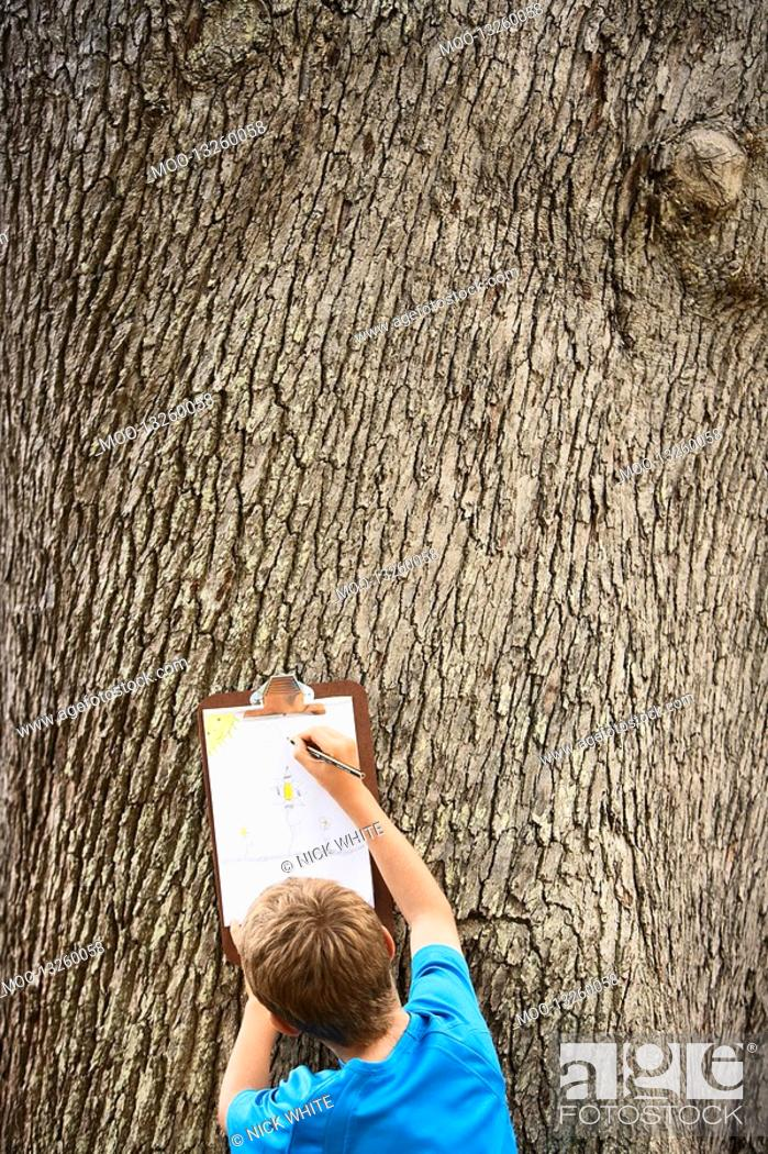 Stock Photo: Boy Drawing by Tree.