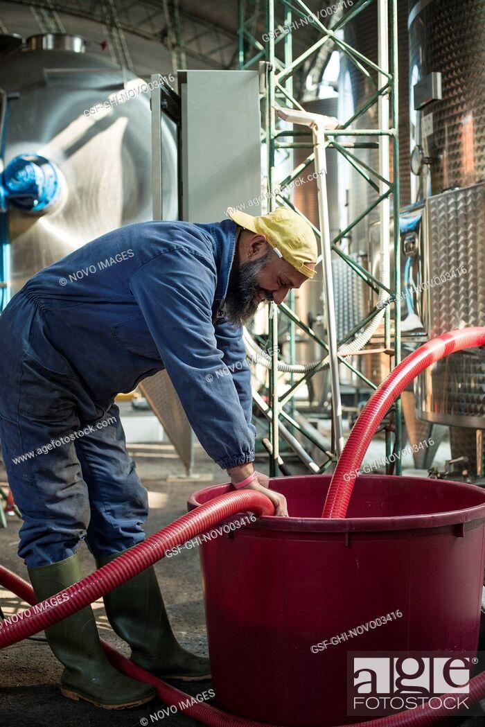 Imagen: Worker at Winery, Gattinara, Piedmont, Italy.