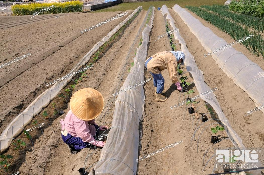 Intensive agriculture under plastic sheeting Stock Photos and Images
