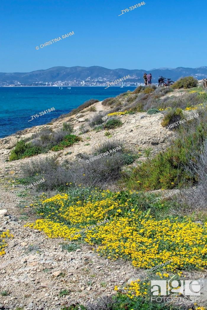 Stock Photo: MALLORCA, SPAIN - MARCH 17, 2019: Wild yellow spring flowers, blue Mediterranean sea and group of people on March 17, 2019 in Mallorca, Spain.