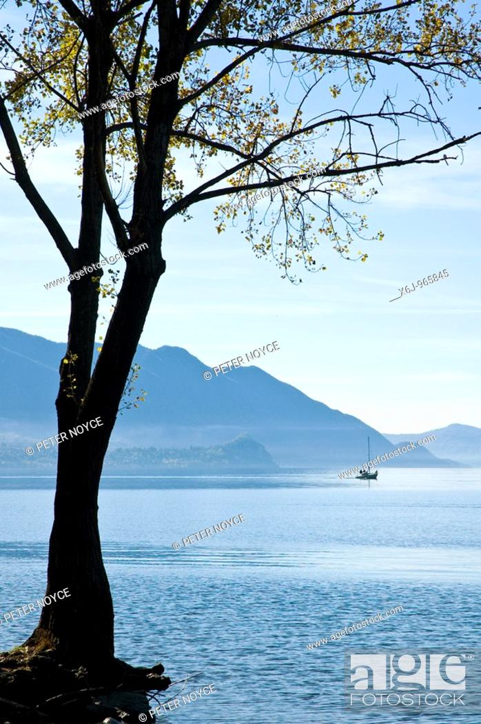 Stock Photo: Tree clinging to land at the waters edge of Lake Maggiore near Luino with a yacht motoring away from the shore.