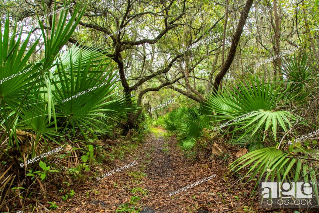Imagen: Walking trail though tropical woods in Oscar Scherer State Park in Nokomis Florida.