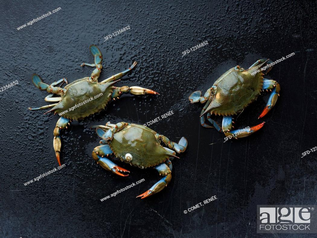 Stock Photo: Maryland blue crabs.