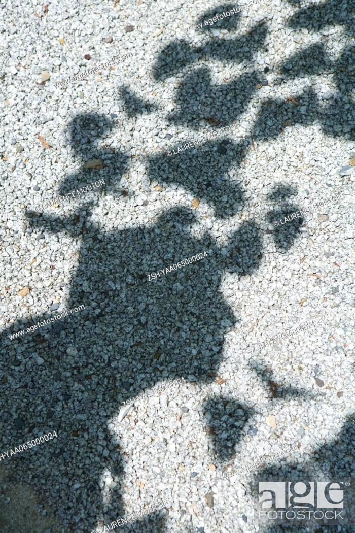 Stock Photo: Shadow of tree leaves on gravel.