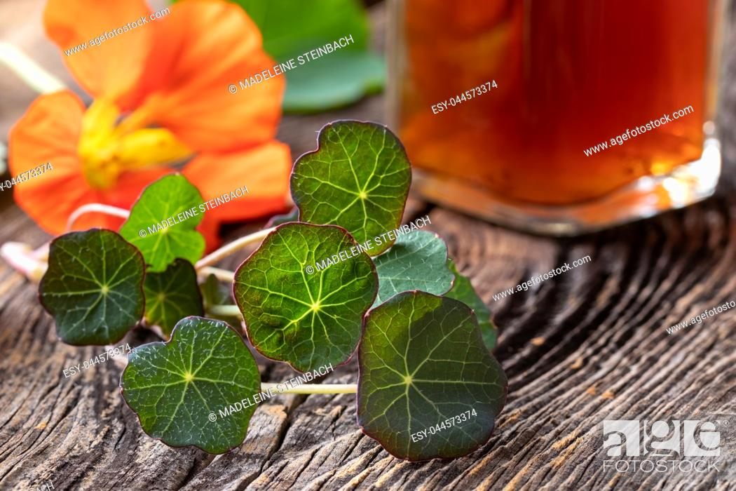 Stock Photo: Young nasturtium leaves, with flower and a bottle of tincture in the background.