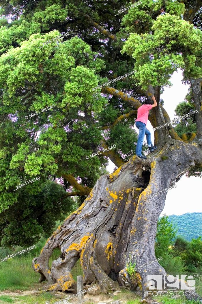 Imagen: Teenager climbing a tree  Yerri, Navarre, Spain, Europe.