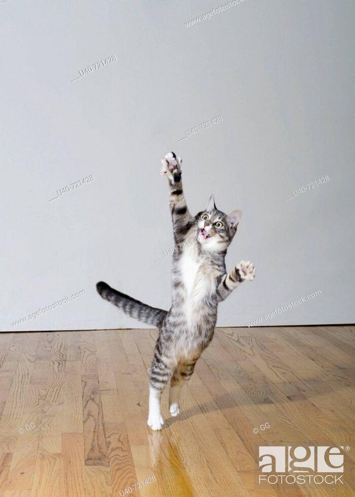 Stock Photo: Cat jumping.