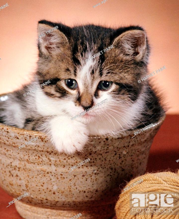 Stock Photo: Kitten in bowl.