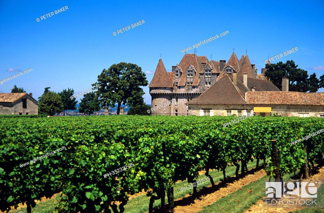 Stock Photo: Vineyards at Chateau de Monbazillac.