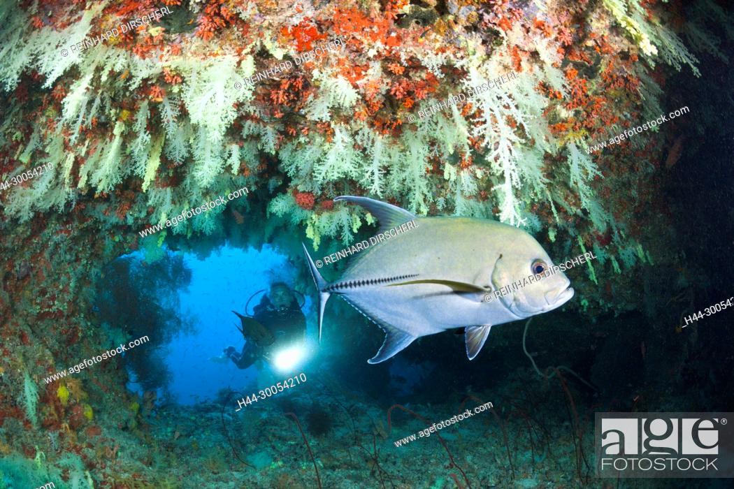 Stock Photo: Scuba Diver exploring Overhang, Felidhu Atoll, Maldives.