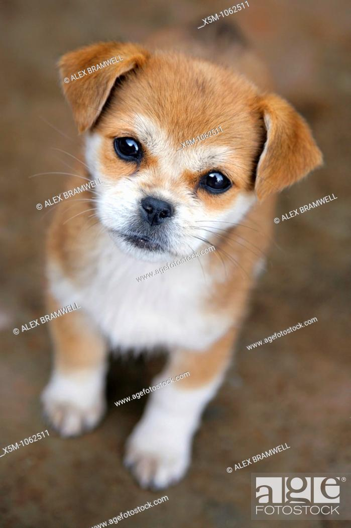 Stock Photo: Cute puppy looking up at the camera.