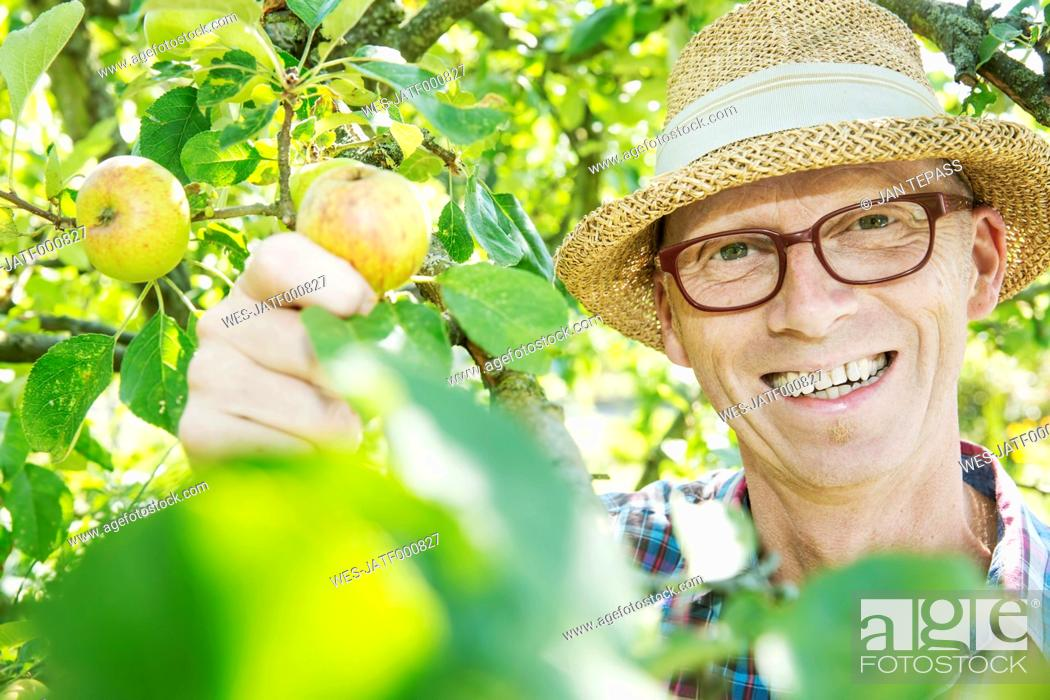 Imagen: Portrait of happy allotment gardener harvesting apples.